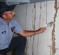 Pest Inspections by Professionals