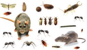 A1 Pest Control Canberra