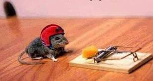 Methods on How to Get Rid of Mice