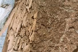Termite Evidence