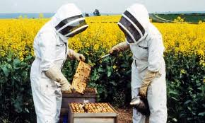 Bee Keepers Canberra