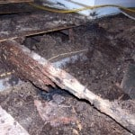 How to get rid of Termites