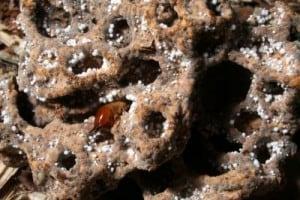 Get Termites