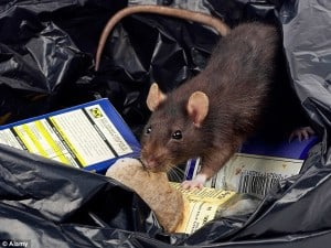 Solutions to your Rodent problem