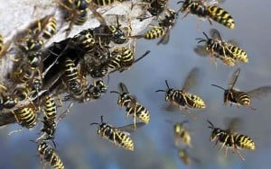 Spring Pest Problem