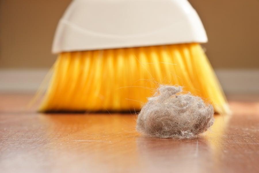 Dust mite management tips
