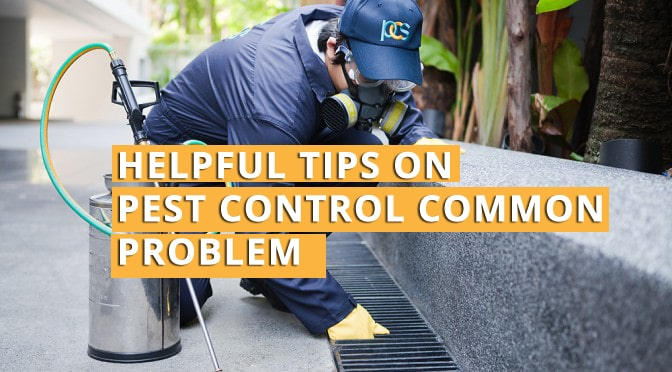 Helpful Tips on Pest Control common problems