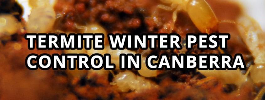 Termite Winter Pest Control in Canberra