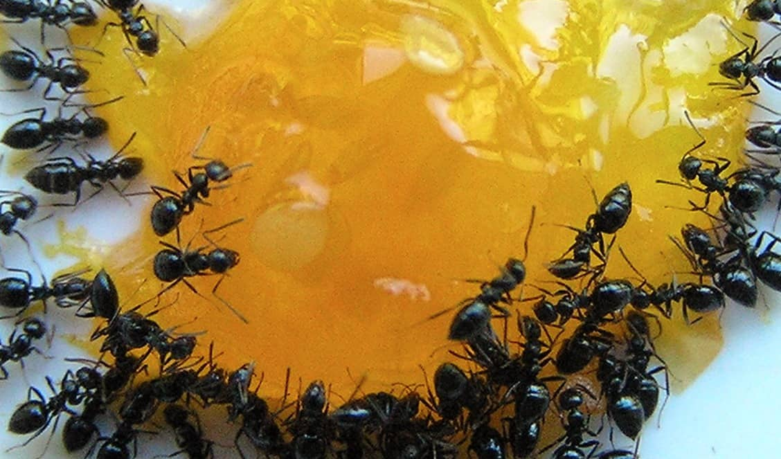 a1 pest control canberra services