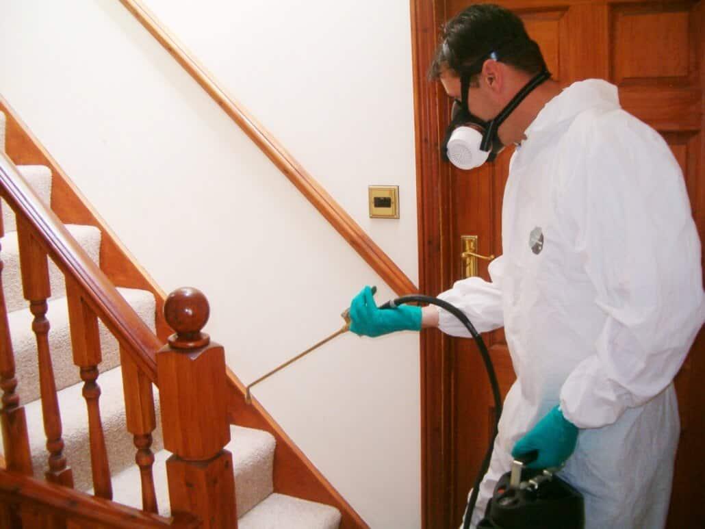 Cara Membasmi Hama Serangga Laron Dari Dalam Rumah Dengan Cepat