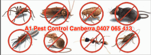 Pest control is essential