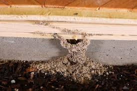 Why You Need a Termite Barrier? Are Swarmers Termites? 1