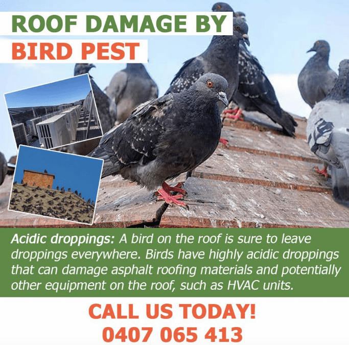 How dangerous are bird droppings