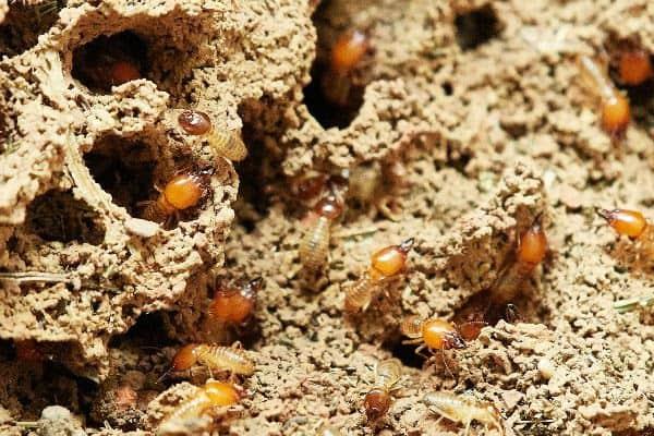 termite indpection