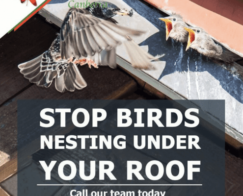 Why You Should Include Bird Proofing as Part of Building Maintenance in Canberra 2