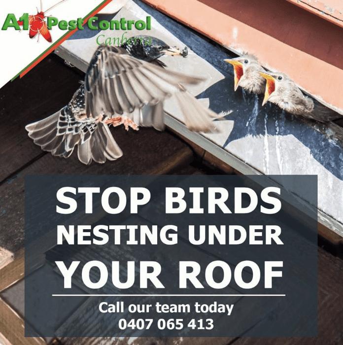 Bird Proofing And Solar Panel Maintenance