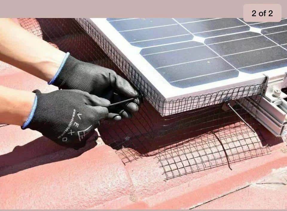 Why You Need Bird Proofing and Solar Panel Maintenance 1