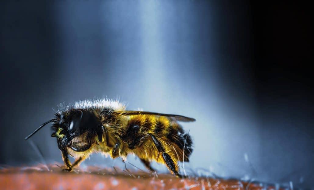 Wasps & Bees 1