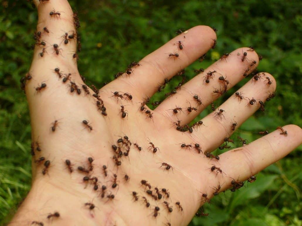 What Do Ant Bites Look Like? 4