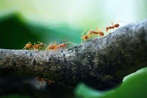 ant bites