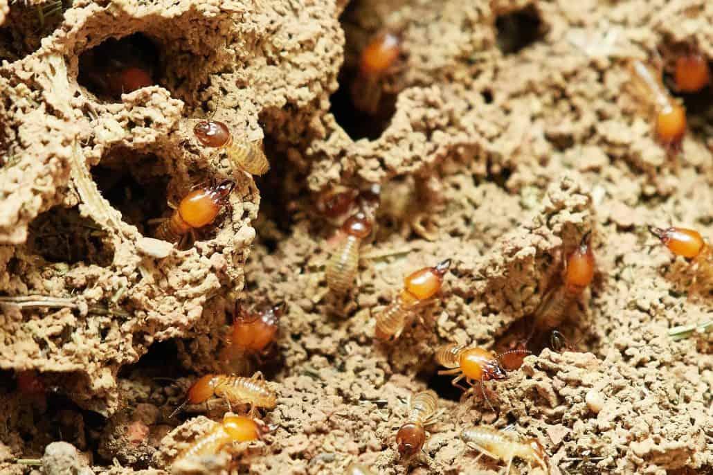 """Pest Control Service in """"Bush Capital"""" Canberra 1"""