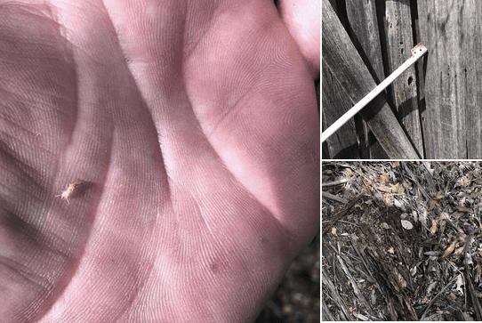 strata termite inspection