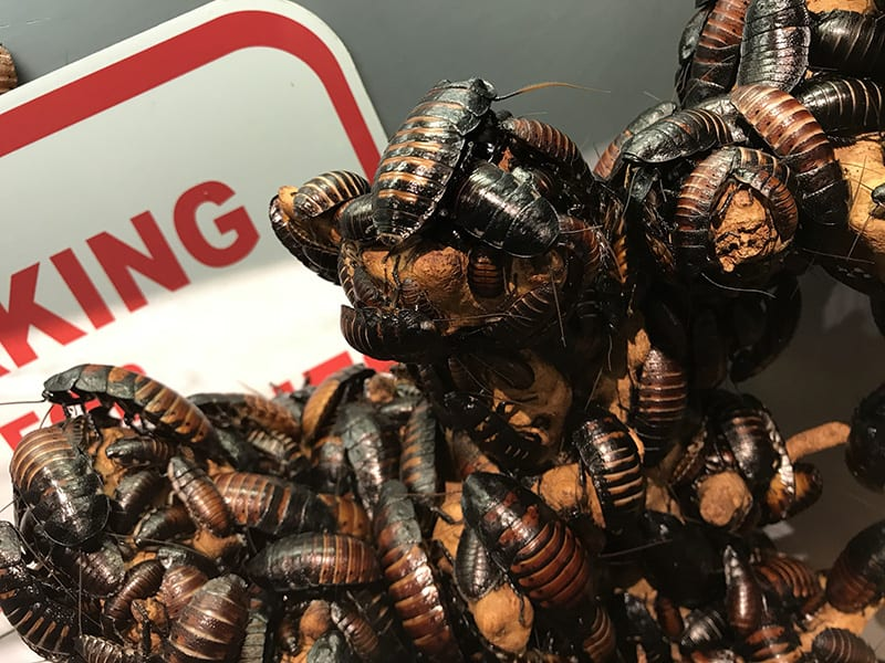 Pest Control Treatment Protects You, Your Family And Home 3