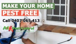 Tips on Pest Control