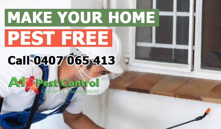 12 Reasons Why Hiring Pest Control Canberra Services In Your Area 2