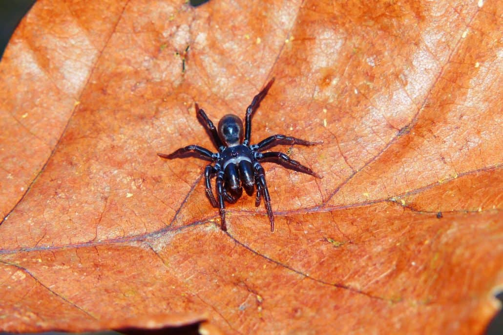 Get to Know Them: 7 Helpful Tips About Common Spiders 4
