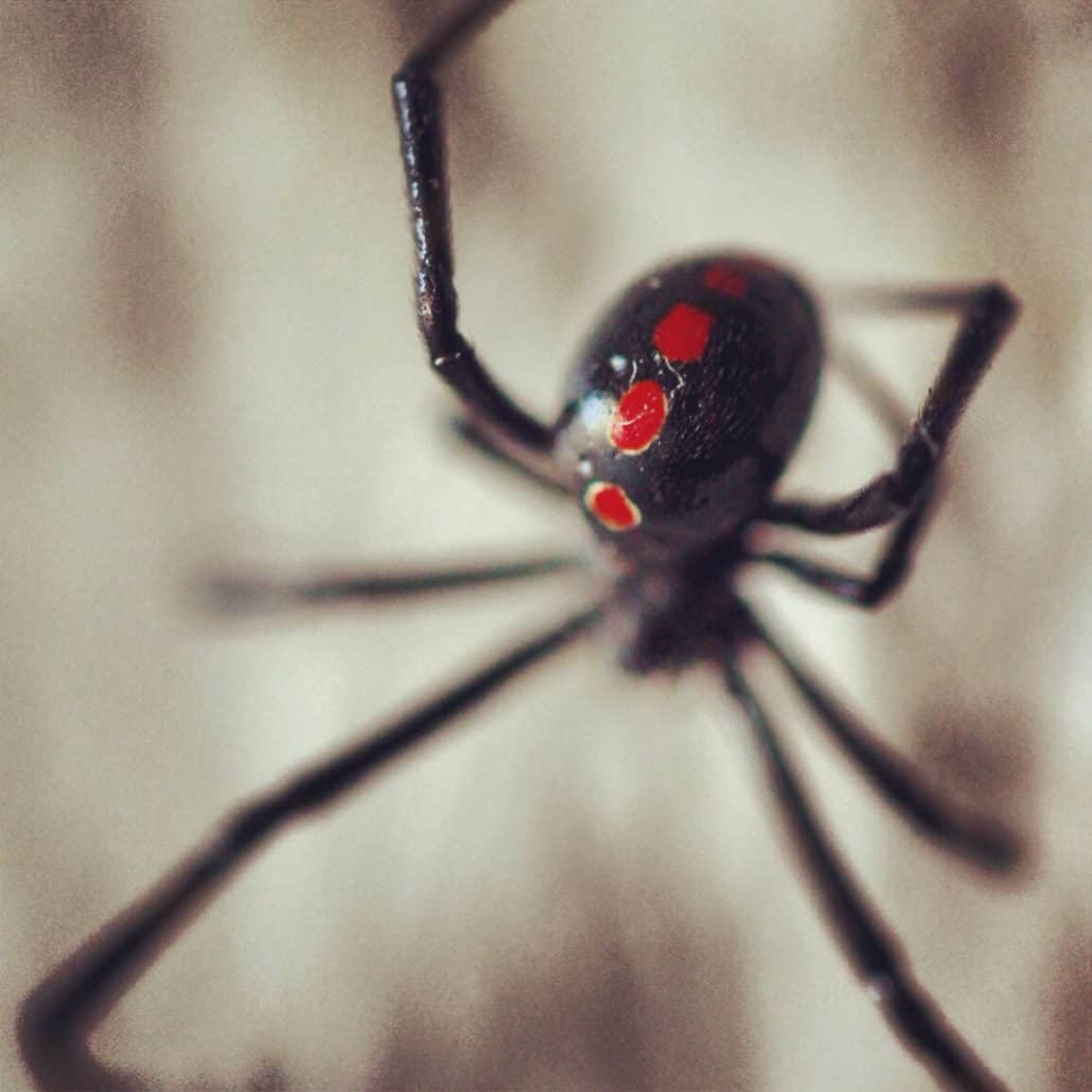 Get to Know Them: 7 Helpful Tips About Common Spiders 1