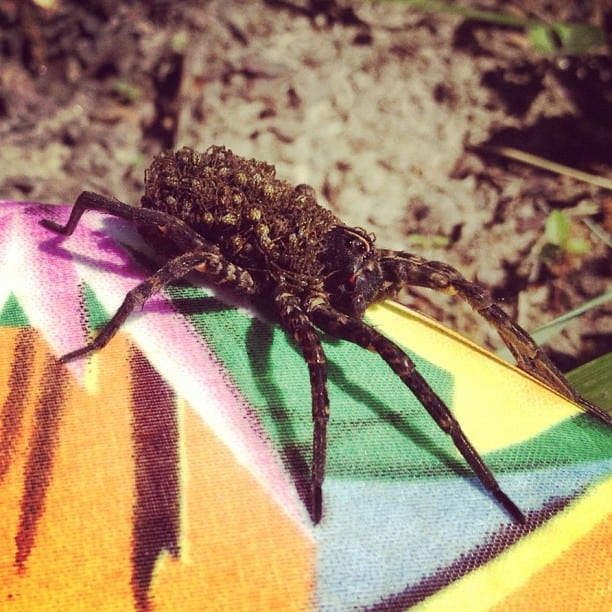 Get to Know Them: 7 Helpful Tips About Common Spiders 6