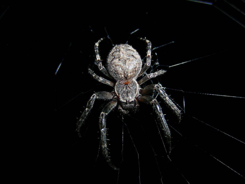 Get to Know Them: 7 Helpful Tips About Common Spiders 10