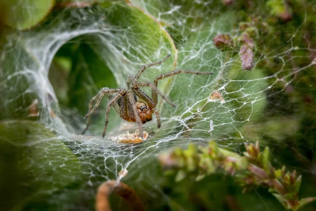 Get to Know Them: 7 Helpful Tips About Common Spiders 5