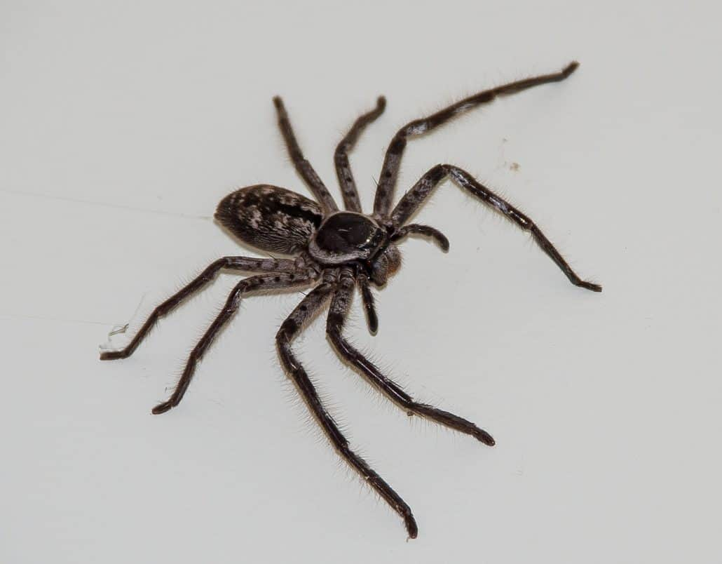Get to Know Them: 7 Helpful Tips About Common Spiders 3