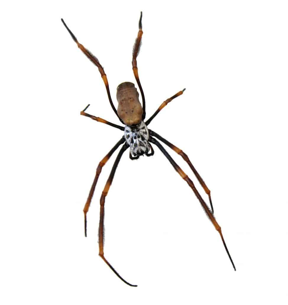 Get to Know Them: 7 Helpful Tips About Common Spiders 2