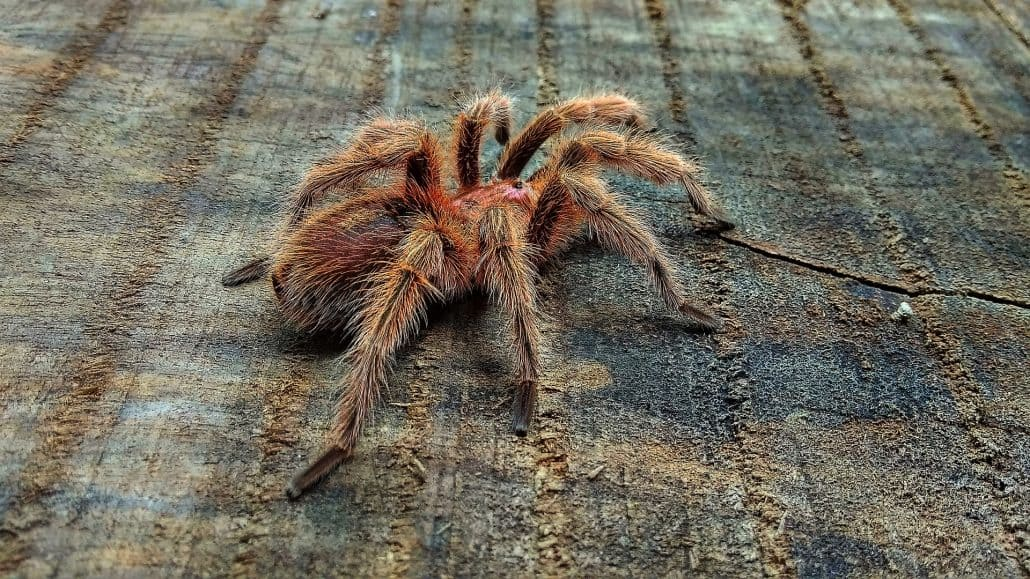 Get to Know Them: 7 Helpful Tips About Common Spiders 8