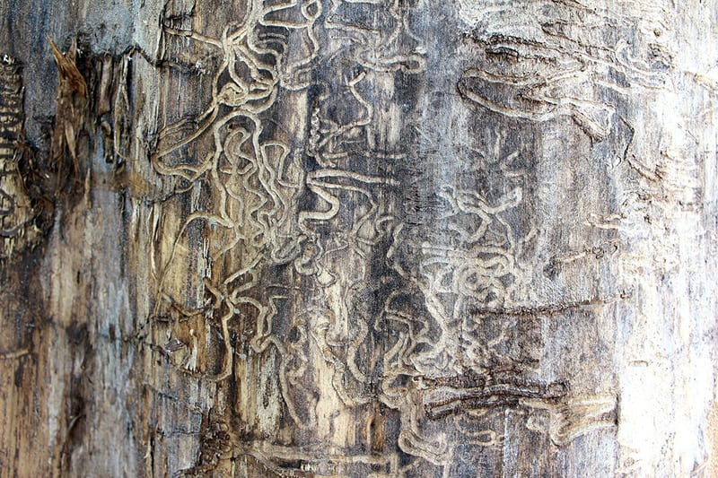 Found Termites in Your Home? It's time to call the experts! 1
