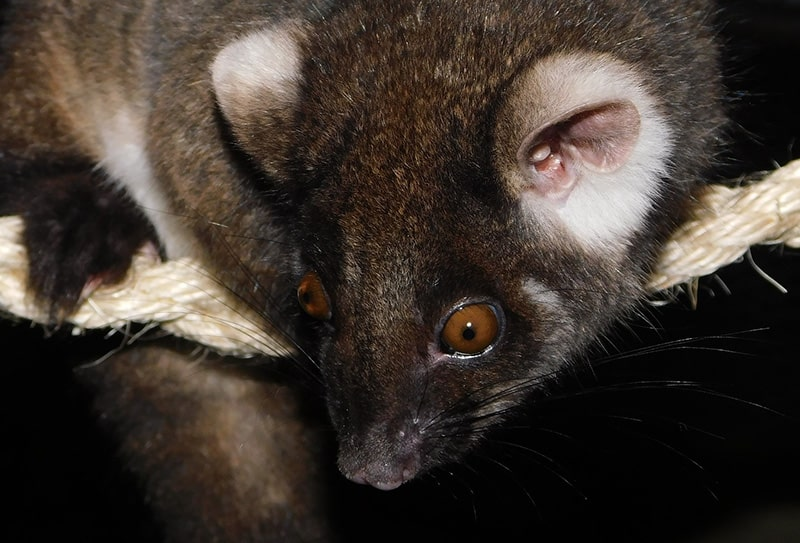 Increasing Pests Population in Canberra: Why You Should Be Bothered 2