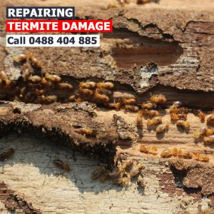 termite barrier Canberra