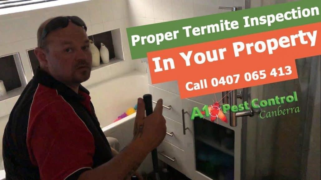 termites in your street