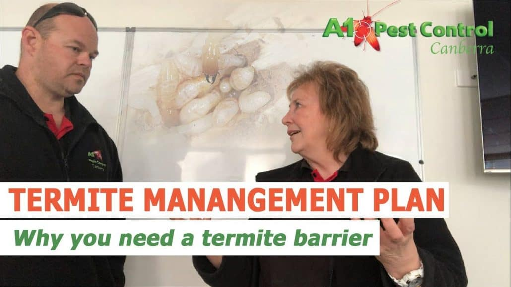 termite winter pest control